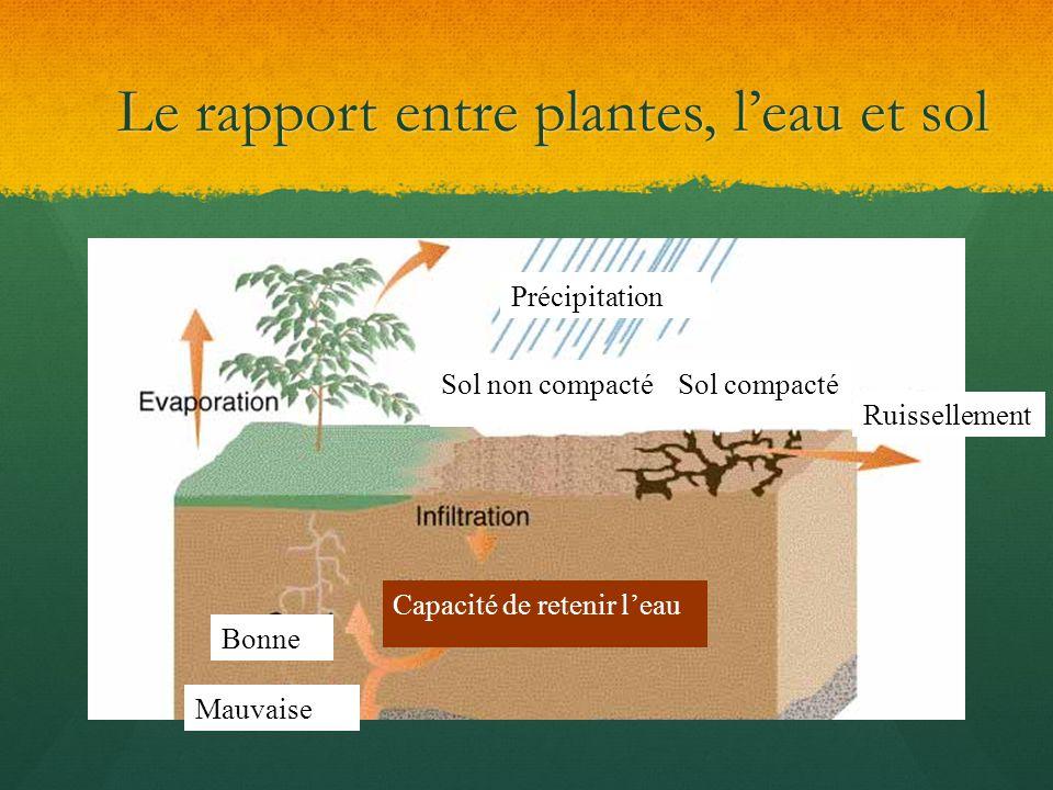 Le rapport entre plantes, leau et sol Précipitation Sol non compactéSol compacté Ruissellement Capacité de retenir leau Bonne Mauvaise