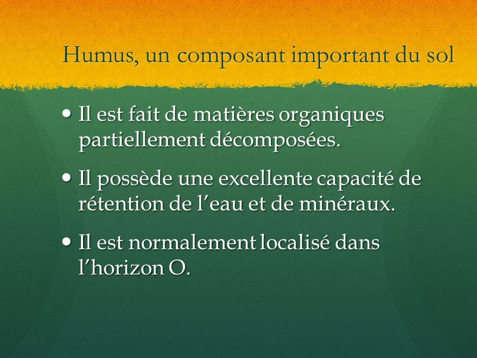 Humus, un composant important du sol Il est fait de matières organiques partiellement décomposées. Il est fait de matières organiques partiellement dé