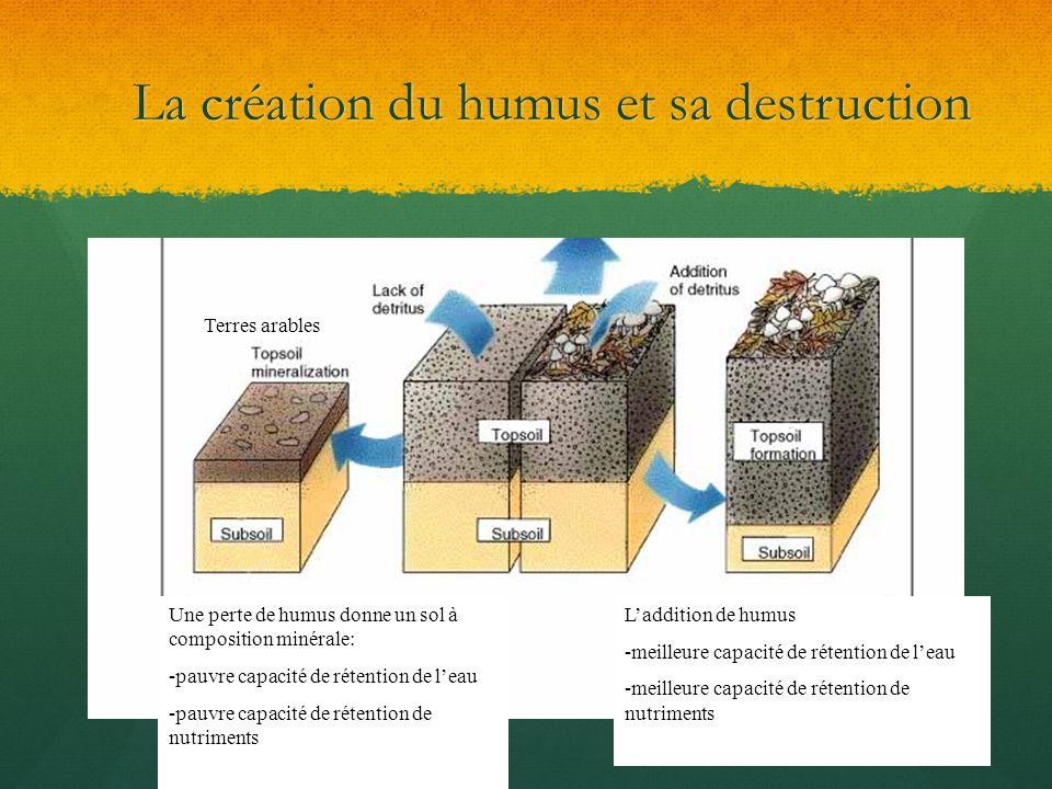 La création du humus et sa destruction Terres arables Une perte de humus donne un sol à composition minérale: -pauvre capacité de rétention de leau -p