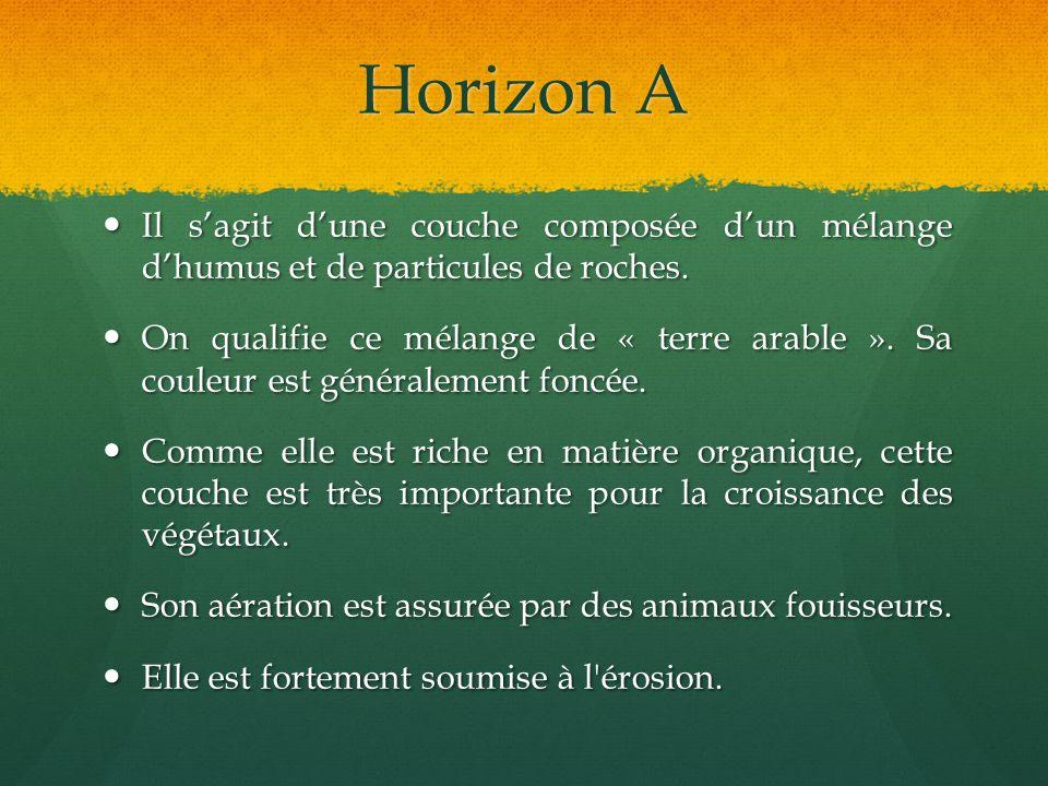 Horizon A Il sagit dune couche composée dun mélange dhumus et de particules de roches. Il sagit dune couche composée dun mélange dhumus et de particul