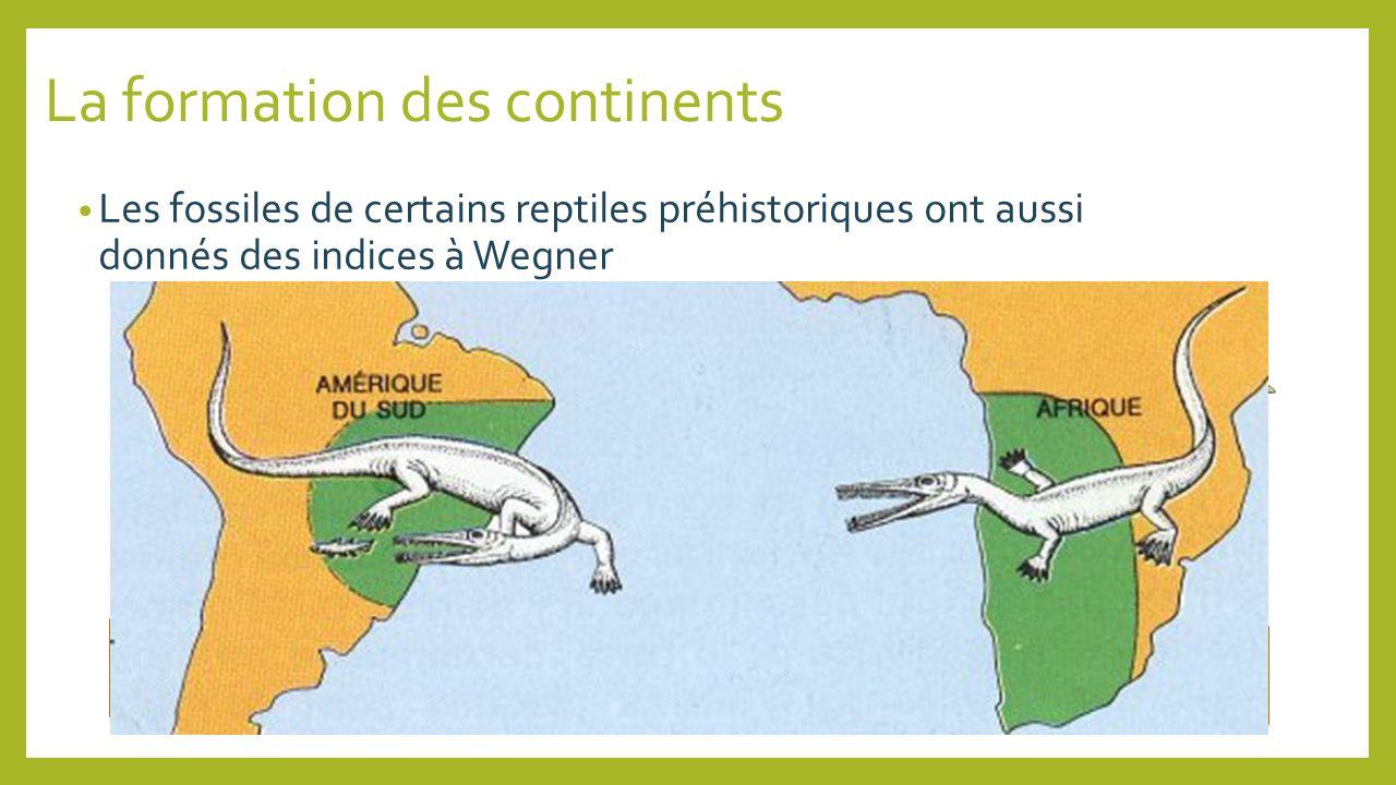 La formation des continents Les fossiles de certains reptiles préhistoriques ont aussi donnés des indices à Wegner Mésosaurus Lystrosaurus