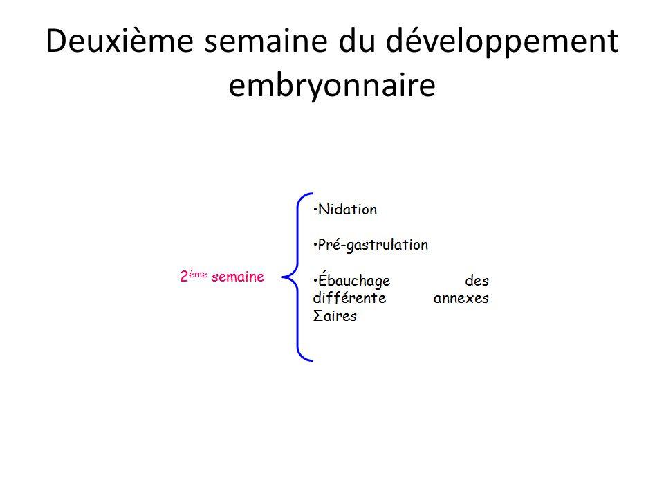 Deuxième semaine du développement embryonnaire