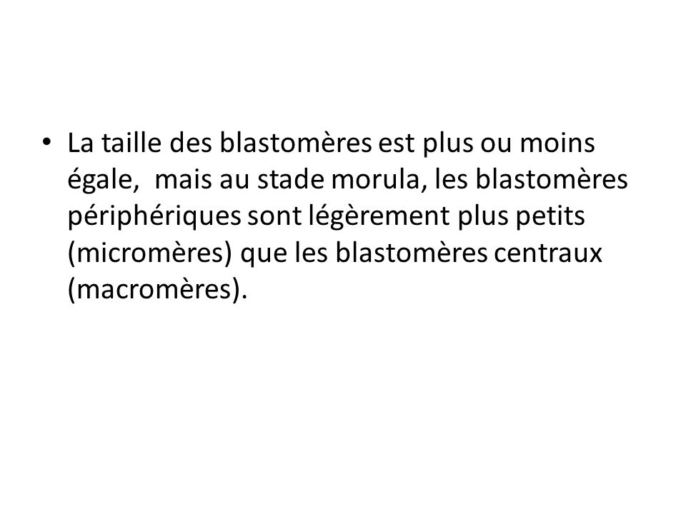 La taille des blastomères est plus ou moins égale, mais au stade morula, les blastomères périphériques sont légèrement plus petits (micromères) que le