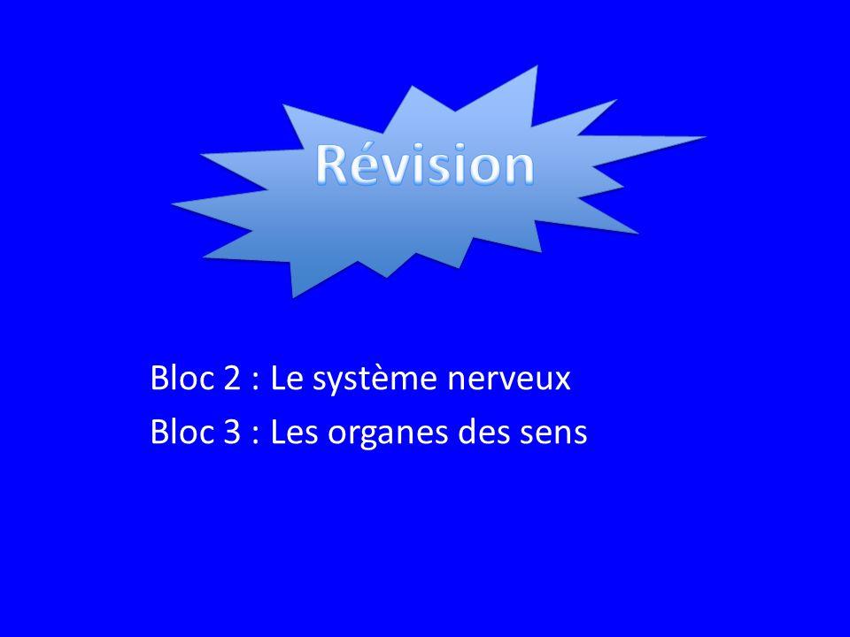 Bloc 2 : Le système nerveux Bloc 3 : Les organes des sens