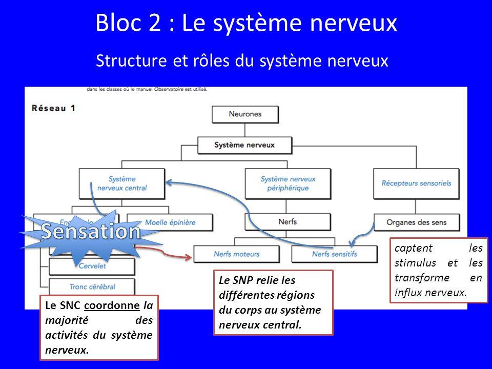 Bloc 2 : Le système nerveux Le SNC coordonne la majorité des activités du système nerveux.