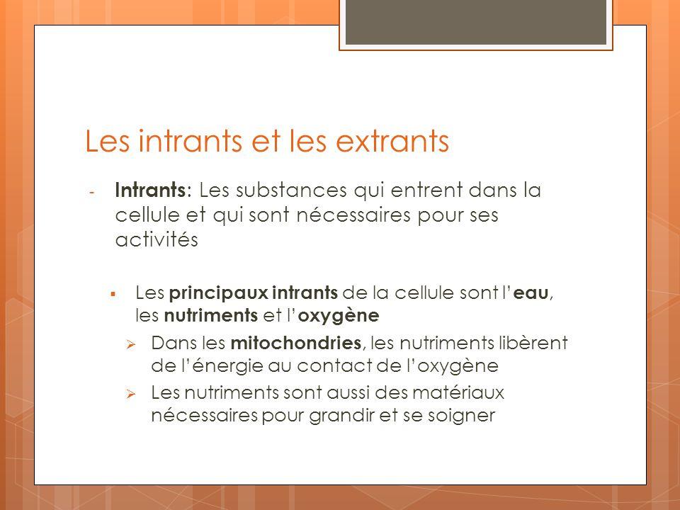 Les intrants et les extrants - Intrants : Les substances qui entrent dans la cellule et qui sont nécessaires pour ses activités Les principaux intrant