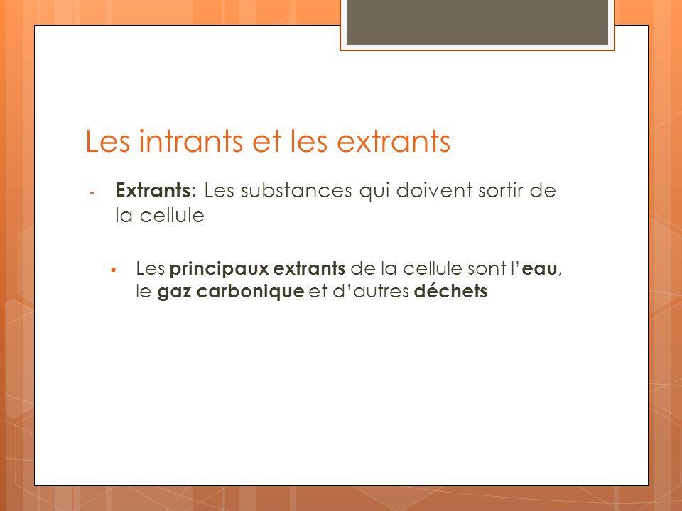Les intrants et les extrants - Extrants : Les substances qui doivent sortir de la cellule Les principaux extrants de la cellule sont l eau, le gaz car