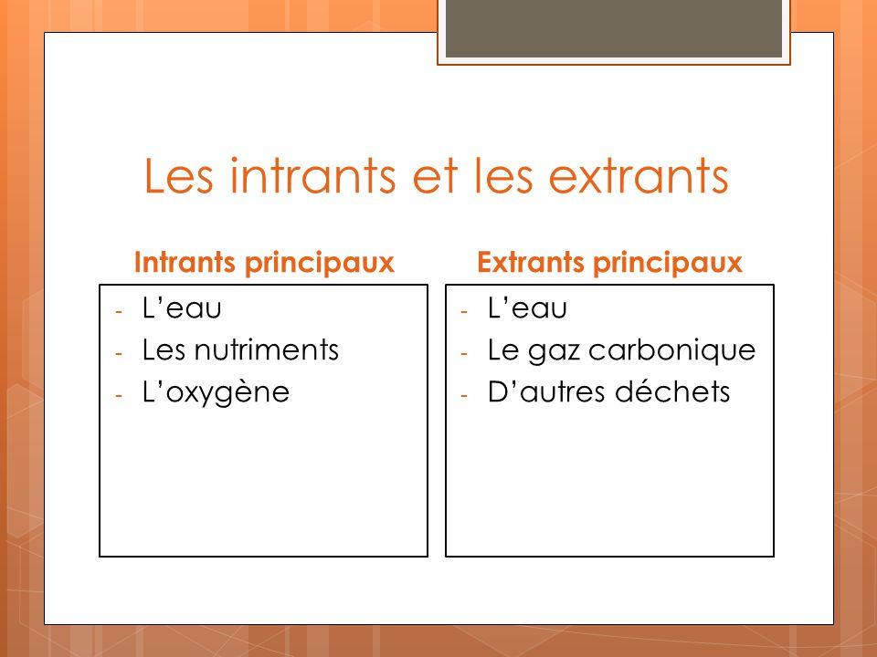 Les intrants et les extrants Intrants principaux - Leau - Les nutriments - Loxygène Extrants principaux - Leau - Le gaz carbonique - Dautres déchets
