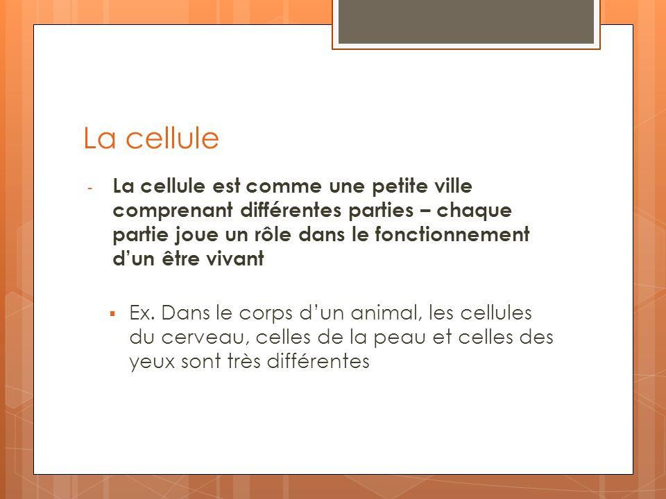 La cellule - La cellule est comme une petite ville comprenant différentes parties – chaque partie joue un rôle dans le fonctionnement dun être vivant