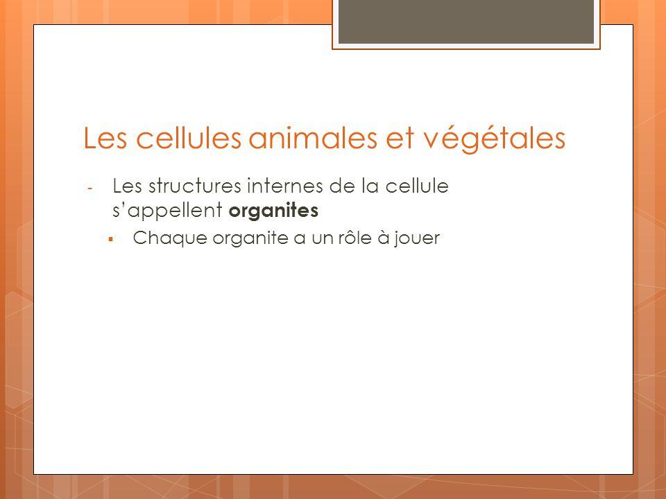 Les cellules animales et végétales - Les structures internes de la cellule sappellent organites Chaque organite a un rôle à jouer