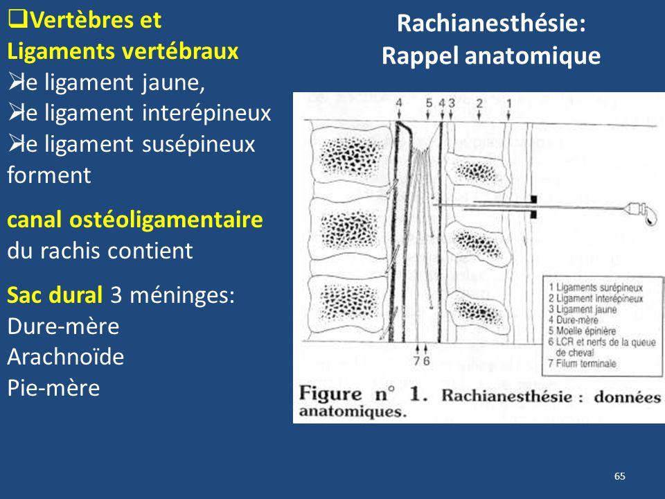 Rachianesthésie: Rappel anatomique 65 Vertèbres et Ligaments vertébraux le ligament jaune, le ligament interépineux le ligament susépineux forment can