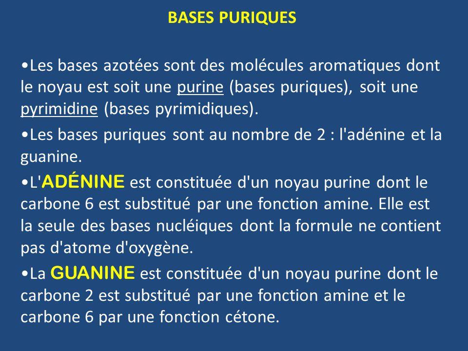 BASES PURIQUES Les bases azotées sont des molécules aromatiques dont le noyau est soit une purine (bases puriques), soit une pyrimidine (bases pyrimidiques).