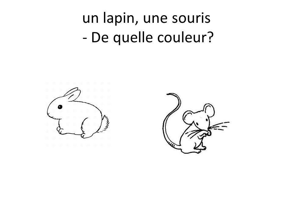 un lapin, une souris - De quelle couleur?