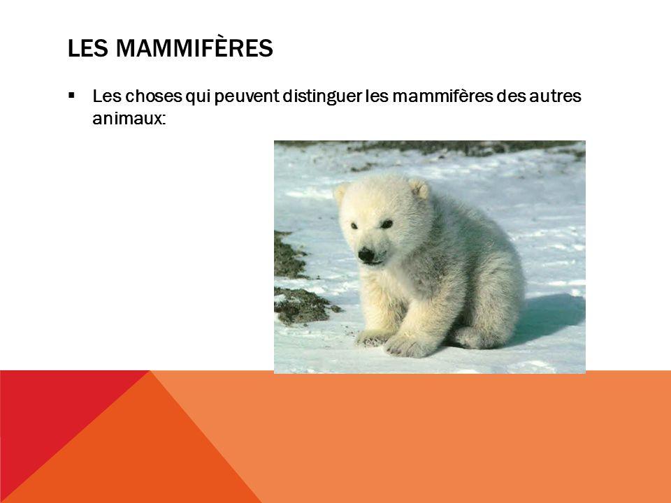 LES MAMMIFÈRES Les choses qui peuvent distinguer les mammifères des autres animaux: