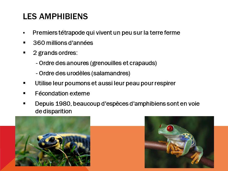 LES AMPHIBIENS Premiers tétrapode qui vivent un peu sur la terre ferme 360 millions d années 2 grands ordres: - Ordre des anoures (grenouilles et crapauds) - Ordre des urodèles (salamandres) Utilise leur poumons et aussi leur peau pour respirer Fécondation externe Depuis 1980, beaucoup d espèces d amphibiens sont en voie..de disparition
