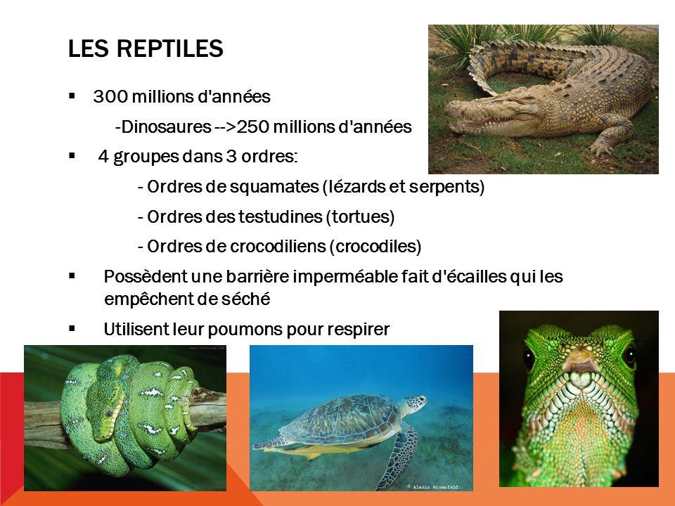 LES REPTILES 300 millions d années -Dinosaures -->250 millions d années 4 groupes dans 3 ordres: - Ordres de squamates (lézards et serpents) - Ordres des testudines (tortues) - Ordres de crocodiliens (crocodiles) Possèdent une barrière imperméable fait d écailles qui les..empêchent de séché Utilisent leur poumons pour respirer