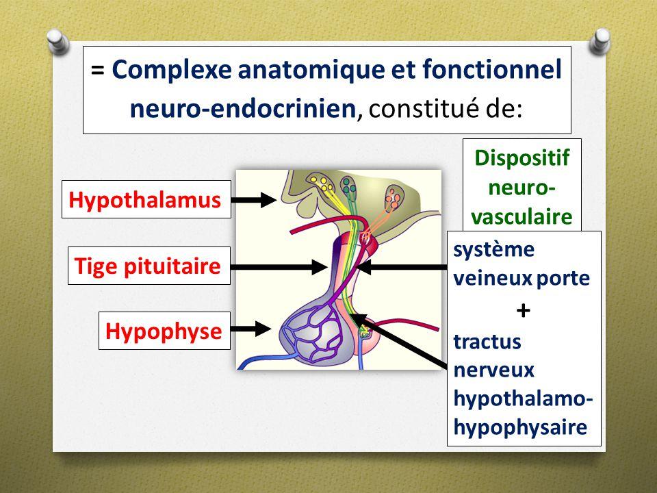 = Complexe anatomique et fonctionnel neuro-endocrinien, constitué de: Dispositif neuro- vasculaire Hypothalamus Hypophyse Tige pituitaire système vein