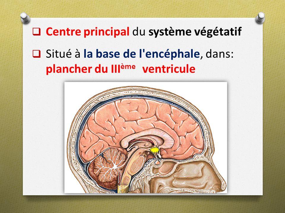Centre principal du système végétatif Situé à la base de l'encéphale, dans: plancher du III ème ventricule