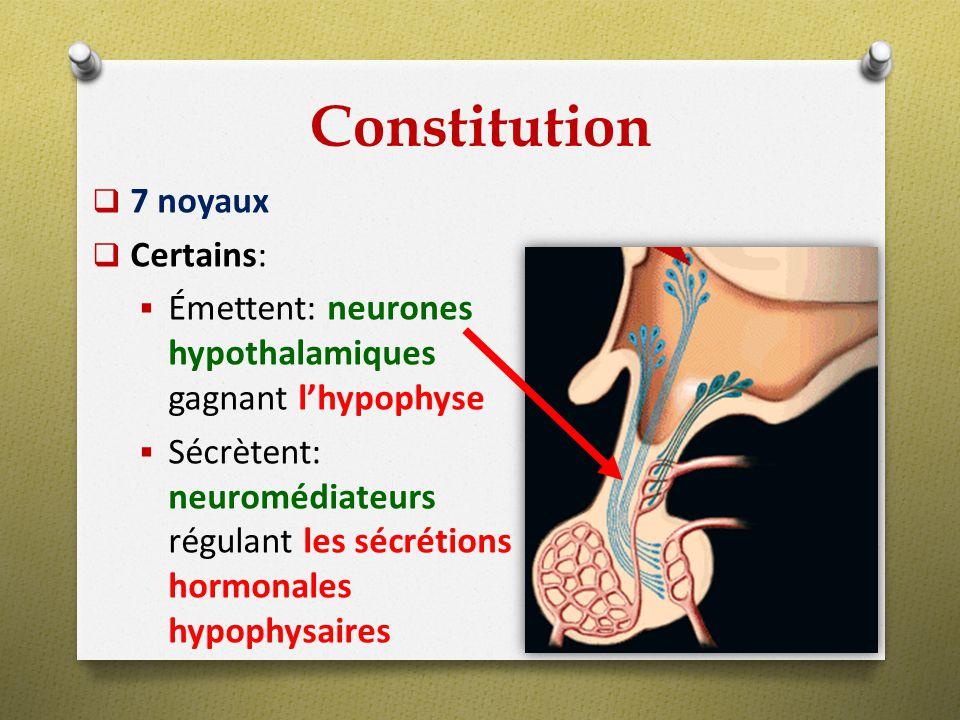 Constitution 7 noyaux Certains: Émettent: neurones hypothalamiques gagnant lhypophyse Sécrètent: neuromédiateurs régulant les sécrétions hormonales hy