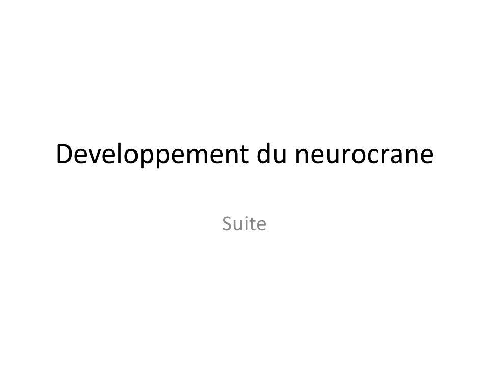 Developpement du neurocrane Suite