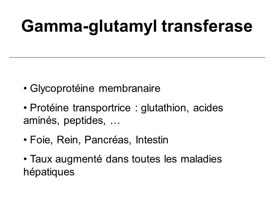Gamma-glutamyl transferase Glycoprotéine membranaire Protéine transportrice : glutathion, acides aminés, peptides, … Foie, Rein, Pancréas, Intestin Ta