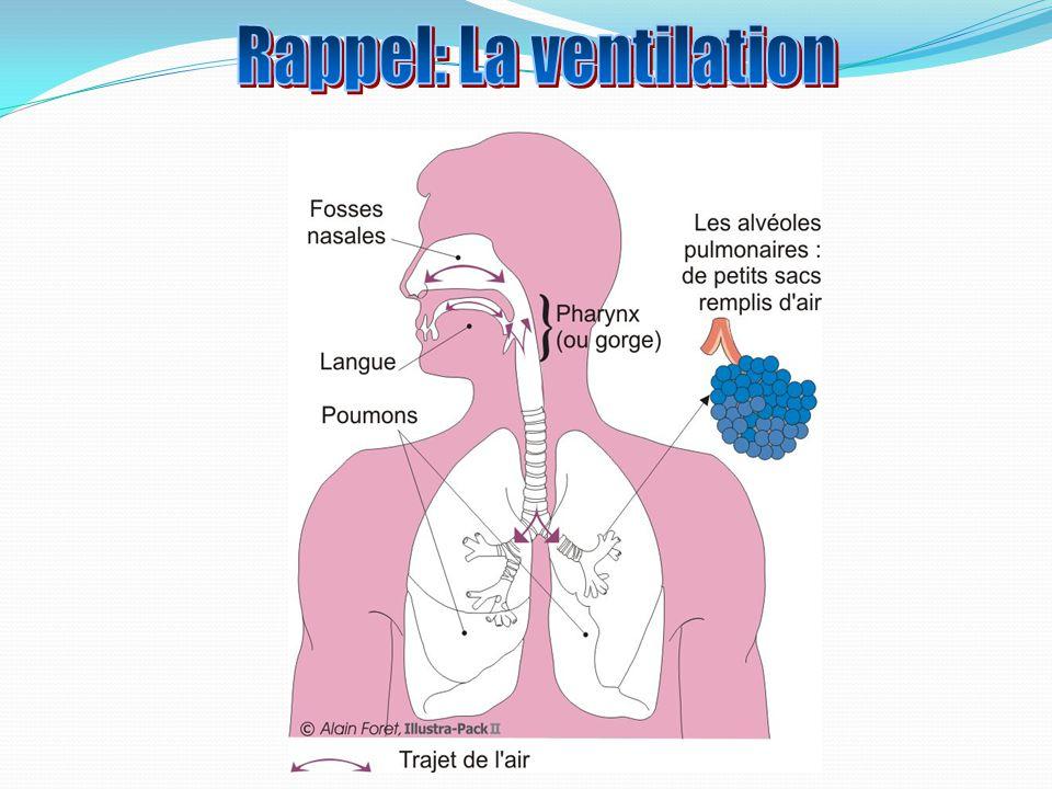 Bulbe Rachidien Inspiration: Air ~21% dO2 Expiration: Rejet du CO2