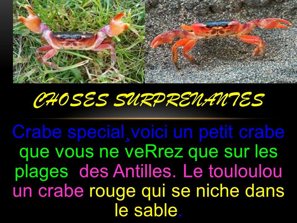 Crabe special¸voici un petit crabe que vous ne veRrez que sur les plages des Antilles. Le touloulou un crabe rouge qui se niche dans le sable. CHOSES