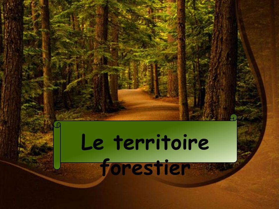 Le territoire forestier
