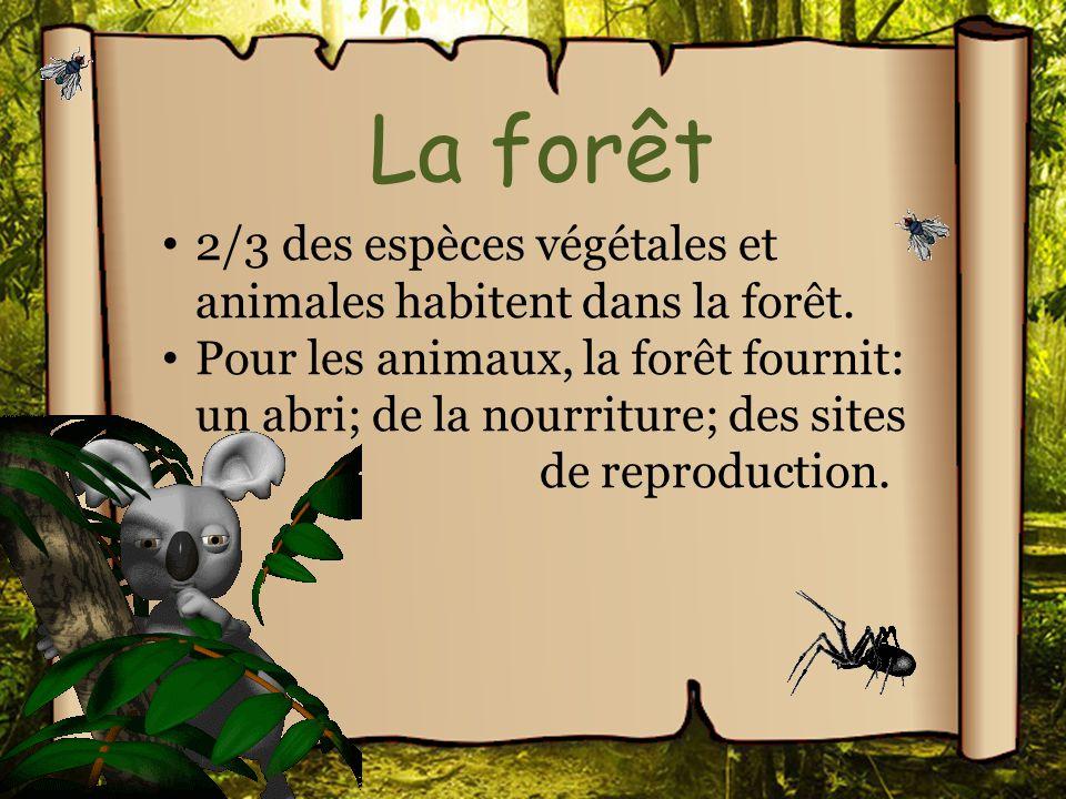 La forêt 2/3 des espèces végétales et animales habitent dans la forêt.