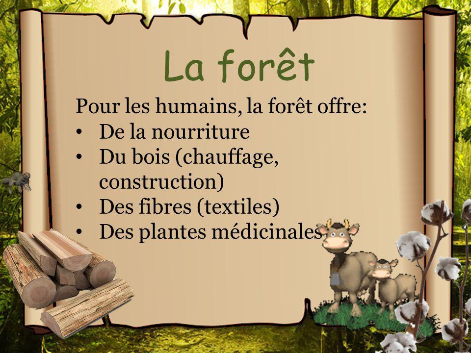 La forêt Pour les humains, la forêt offre: De la nourriture Du bois (chauffage, construction) Des fibres (textiles) Des plantes médicinales