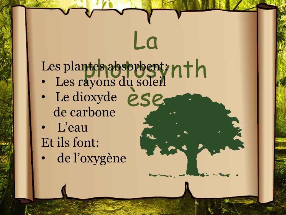 La photosynth èse Les plantes absorbent: Les rayons du soleil Le dioxyde de carbone Leau Et ils font: de loxygène