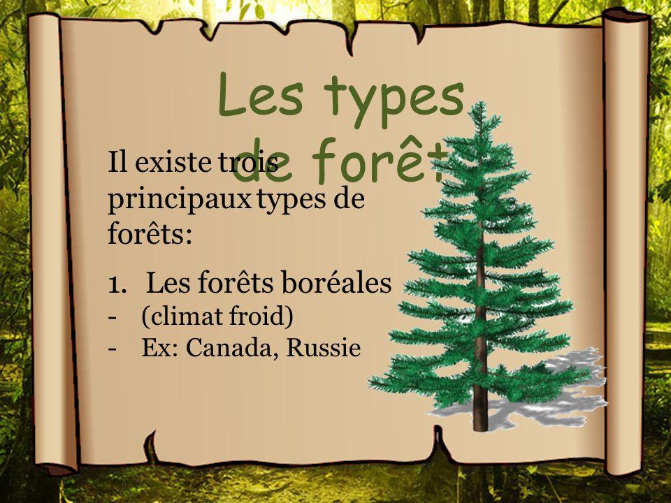 Les types de forêt Il existe trois principaux types de forêts: 1.Les forêts boréales -(climat froid) -Ex: Canada, Russie