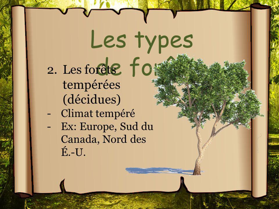 Les types de forêt 2.Les forêts tempérées (décidues) -Climat tempéré -Ex: Europe, Sud du Canada, Nord des É.-U.
