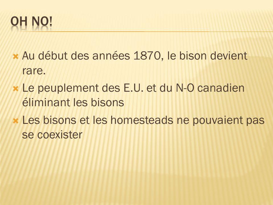 La chasse représente une grande partie de leur revenu Les Métis ont adaptes les Lois du Saint- Laurent en décembre 1873 Les lois étaient très stricte pour protéger l avenir des bisons