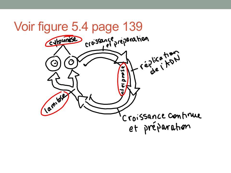 Voir figure 5.4 page 139
