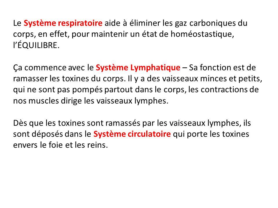 Le Système respiratoire aide à éliminer les gaz carboniques du corps, en effet, pour maintenir un état de homéostastique, lÉQUILIBRE.