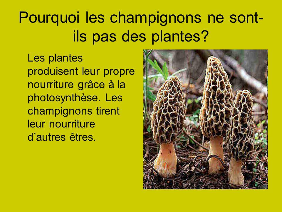 Pourquoi les champignons ne sont- ils pas des plantes.