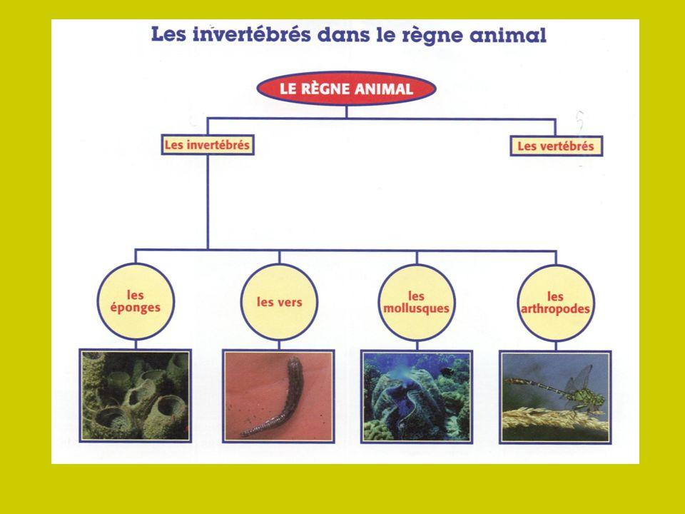 les vertébrés les poissonsles amphibiensles reptilesLes oiseauxles mammifères les poils le sang chaud respirent à laide des poumons lallaitement La souris