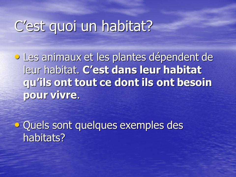 Cest quoi un habitat? Les animaux et les plantes dépendent de leur habitat. Cest dans leur habitat quils ont tout ce dont ils ont besoin pour vivre. L