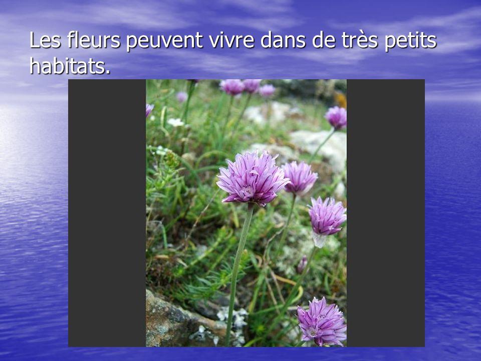 Les fleurs peuvent vivre dans de très petits habitats.