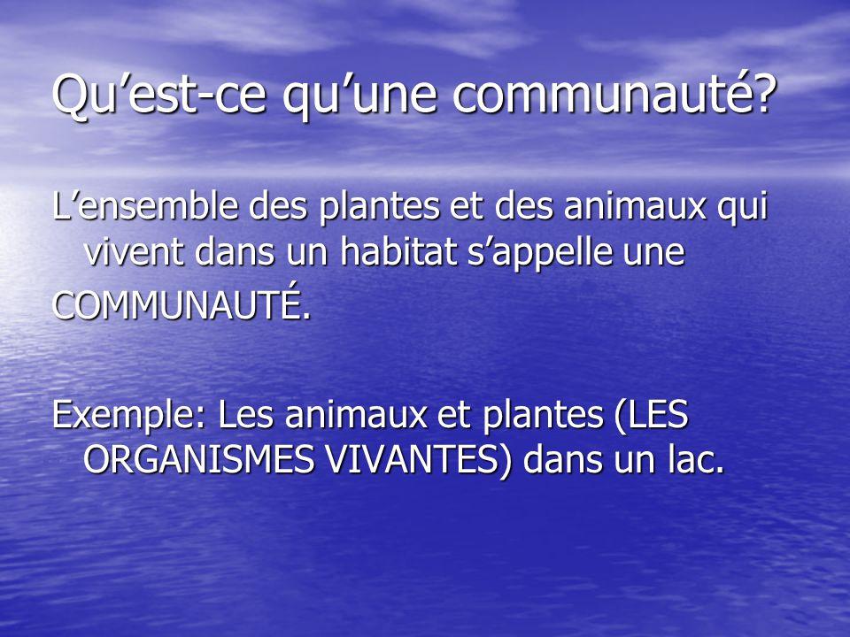 Quest-ce quune communauté? Lensemble des plantes et des animaux qui vivent dans un habitat sappelle une COMMUNAUTÉ. Exemple: Les animaux et plantes (L