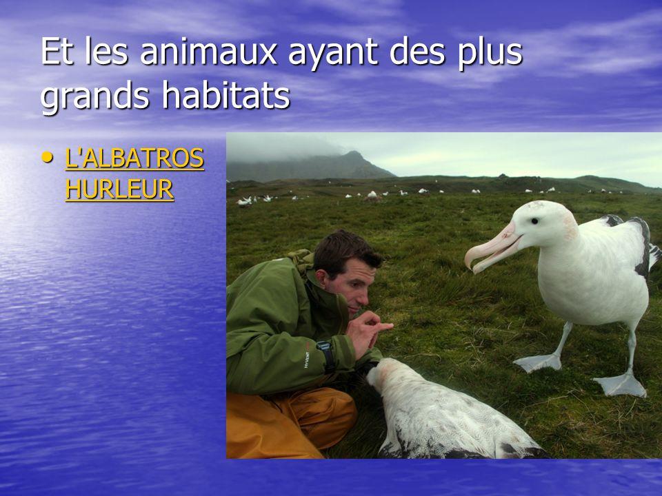 Et les animaux ayant des plus grands habitats L'ALBATROS HURLEUR L'ALBATROS HURLEUR L'ALBATROS HURLEUR L'ALBATROS HURLEUR