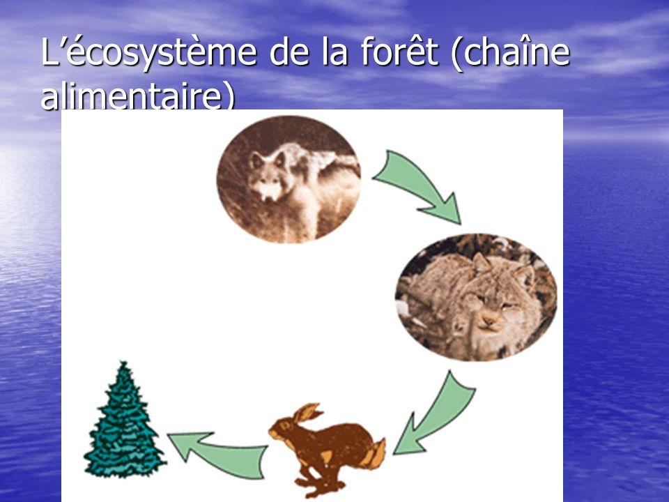 Lécosystème de la forêt (chaîne alimentaire)