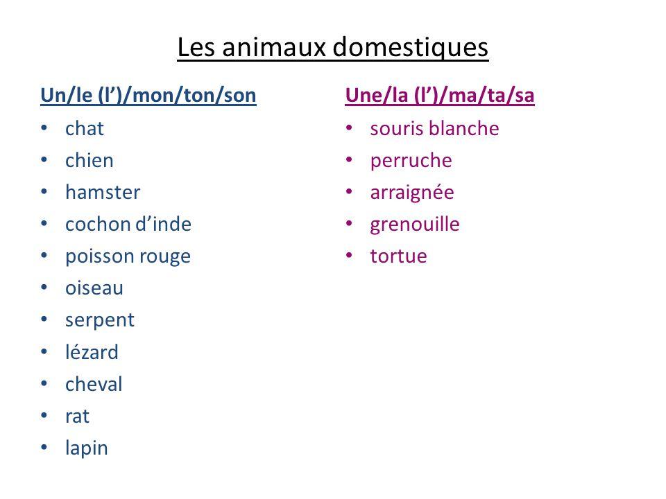 Les animaux domestiques Un/le (l)/mon/ton/son chat chien hamster cochon dinde poisson rouge oiseau serpent lézard cheval rat lapin Une/la (l)/ma/ta/sa