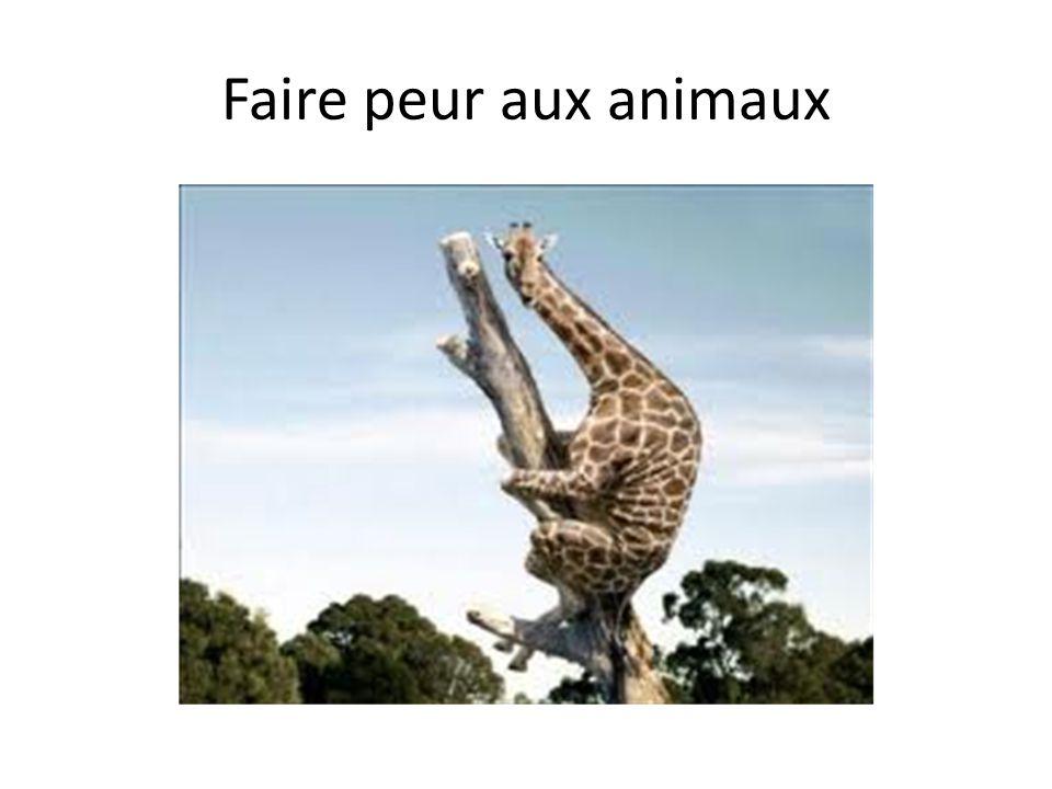 Faire peur aux animaux