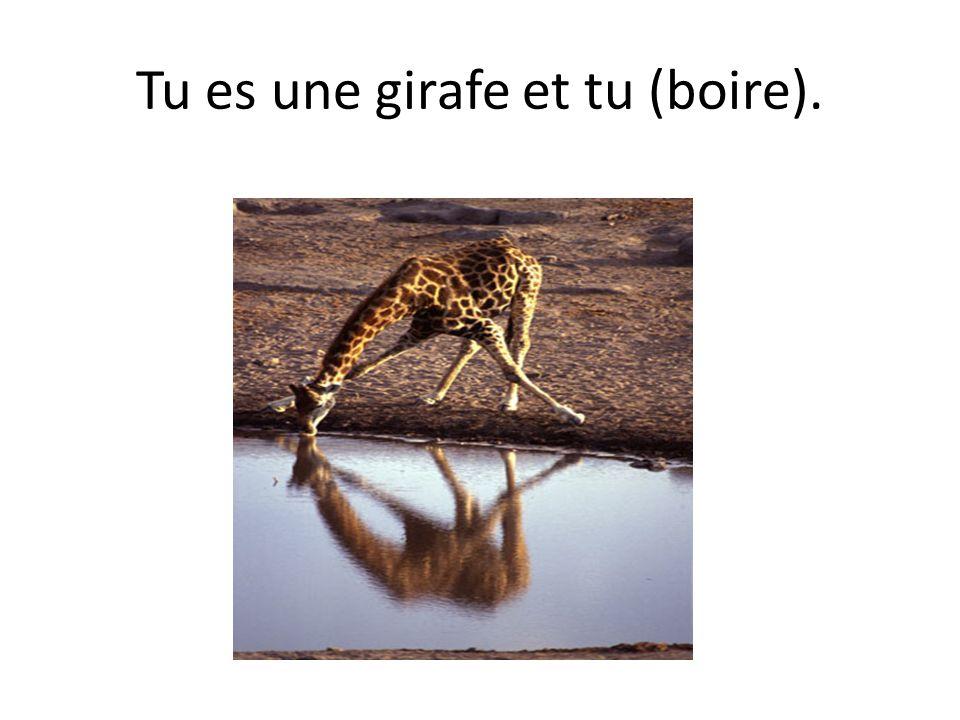 Tu es une girafe et tu (boire).
