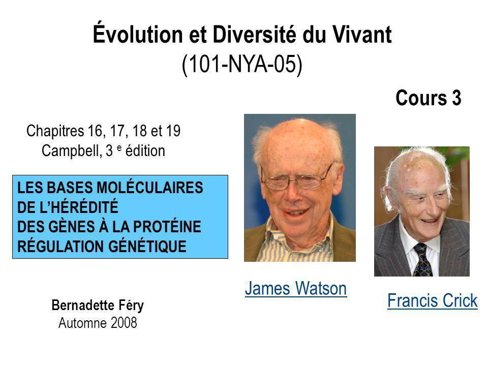 Évolution et Diversité du Vivant (101-NYA-05) Bernadette Féry Automne 2008 Chapitres 16, 17, 18 et 19 Campbell, 3 e édition LES BASES MOLÉCULAIRES DE