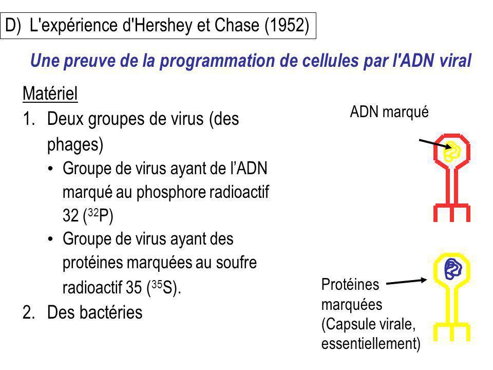 D)L'expérience d'Hershey et Chase (1952) Matériel 1.Deux groupes de virus (des phages) Groupe de virus ayant de lADN marqué au phosphore radioactif 32