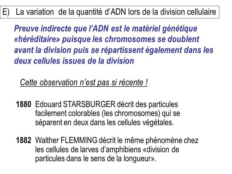 E) La variation de la quantité dADN lors de la division cellulaire 1880 Edouard STARSBURGER décrit des particules facilement colorables (les chromosom