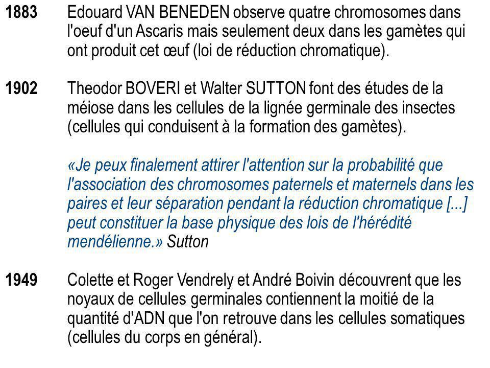 1883 Edouard VAN BENEDEN observe quatre chromosomes dans l'oeuf d'un Ascaris mais seulement deux dans les gamètes qui ont produit cet œuf (loi de rédu